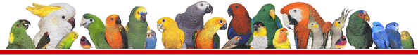 parrots footer image